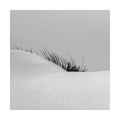 EYELASHES (Nick green2012) Tags: snow rushes blackandwhite minimal square eyelashes curves snowdrift
