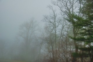 Foggy Forest 32