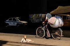 (Jpierrel) Tags: 1855 ambassador fuji fujifilm ixt xt1 xf1855mmf284 inde india calcutta kolkata street dog
