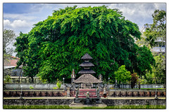 Mangosteen Tree (Tony Steinberg Photography) Tags: architecture art building colour creative cultural culture faith fineart flora god green heritage hindu historical history hut image indonesia landmark landscape leaves lombok manmade mangosteentree old outdoors outside peaceful photo photograph photographicart plant pond prayer religion religious roof scene sculpture statue structure temple thatched tonysteinberg touristattraction travel tree water worship