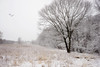 In Memory (JMS2) Tags: nature tree marsh field snow cold winter scenic marshlands memory landscape