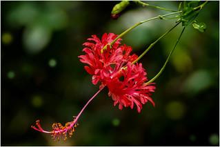 the beautiful flower ...
