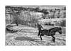 A cold winter (Jan Dobrovsky) Tags: carpathians leicaq landscape winter people reallife rural snow countryside monochrome action car sunshine blackandwhite ukraine village horse countrylife document