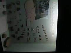 Walk Across Bear Mountain Bridge and History MuseumNov 2017 (ianulimac) Tags: harrimanstatepark bearmountain park ny bridge revolutionarywar forclinton fortmontegomery archeology history hudsonrivernativeamericans nativeamericans precolonial hudsonriver henry hudson georgewshington thechain chainingofthehudsonriver musket cannon ball shot bones pottery ancient shelters artifacts waltwhitman writer statue hessianlake battle suspensionbridge soldiers hunters anthonysnose sirhenryclinton