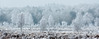 Frozen landscape (nldazuu.com) Tags: ijsdag vorst foggymorning ginkelseheideeobos winter mist ijs mistig gelderland ginkelseheide dalendemist rijp foggy ginkel ice