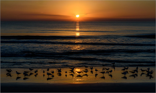 Bird Beach Sunrise by Chuck Hunnicutt - Class B Digital - HM- March 2018