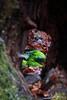 Naturaleza (Luis Cortés Zacarías) Tags: españa tronco musgo árbol asturias silviella naturaleza somiedo