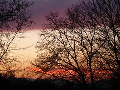 Σούρουπο στη Γαβαλού!  P1040247 (amalia_mar) Tags: σούρουπο σιλουέτεσ δέντρα ηλιοβασίλεμα δύση γαβαλούαιτωλοακαρνανία ελλάδα χωριό sunset trees gavalou etoloakarnania greece village 7dwf silhouettes outdoor sundaylights weeklythemes naturallight