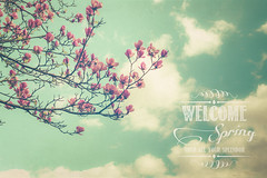 Welcome spring (Ro Cafe) Tags: march spring magnolias tree flowers blooms sky clouds nature outdoors quote textured nikkor2470f28 nikond600 pastelcolours