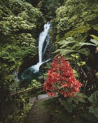 Bali waterfall vibe (stefan.andre87) Tags: adventure destinations vacation travel river tones landscape waterfall indonesia bali