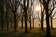the sun is searching for its way (Wöwwesch) Tags: sunrise lake trees silhouettes mist walk light shadow morning