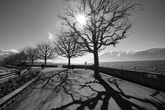 "Promenade by the Lake (Svend RS) Tags: sonyilce7m3 sonya7 alpha a7m3 1224mm40 fe1224mmf4g sel1224g zoom wideangle ultrawideangle blackandwhite monochrome noiretblanc ""artinbw"" biancoenero blancoynegro"