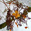 Nature (Diane Buckingham) Tags: nature winter snow landscape birds plants balloch trees mountain glasgow seats scenic rothesay boats yellow colors autumn benches portraits