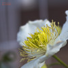 Día 171 (gedaesal) Tags: flower whiteflower closeup macrodreams macro details canon700d