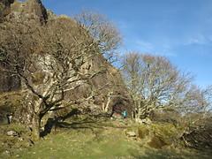 upper crag at tremadog (squeezemonkey) Tags: northwales snowdonia winter castlestafftrip tremadog tradclimbing climbing outdoors climbers landscape trees shadows sunlight craigpantifan uppertier crag