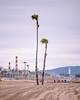 Dockweiler State Beach (Duvalin Papi) Tags: losangeles california dockweilerstatebeach nikond600 sadtographer socal vsco beach palmtrees