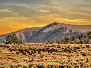 Yellowostone Nationalpark - Wyoming / USA