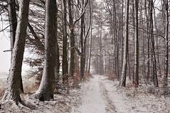 Frühlingserwachen? FRÜHLINGSERWACHEN! ErwAAAAAchen!  ....  So WACH DOCH ENDLICH AUF!!!! (Uli He - Fotofee) Tags: ulrike ulrikehe uli ulihe ulrikehergert hergert nikon nikond90 fotofee schnee frühling frühlingserwachen nikolaus osterhase frühlingsgedicht schneefall schneesturm märz winter ende keinendeinsicht