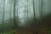 Mysterious Forest (Hector Prada) Tags: bosque niebla camino forest fog path hayedo hojas leaves encantado enchanted creepy árbol tree otoño autumn paísvasco basquecountry atmosphere atmósfera ambiente mood woods