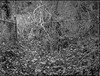 urban forest, decay, wire fence, tangled vines, North Asheville, NC, Mamiya 645 Pro, mamiya sekor 80mm F-2.8, 3.20.18 (steve aimone) Tags: urban urbanlandscape urbandecay metalfence vines ivy leaves northasheville northcarolina mamiya645pro mamiyasekor80mmf28 mamiyaprime primelens ilfordfp4 ilfordilfosol3developer 120 film 120film mediumformat monochrome monochromatic blackandwhite forest