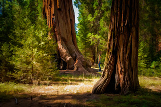 Sequoia - Textured HDR
