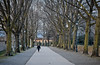 Lucca in February (Camera Freak) Tags: 180217londonitalyleica2018 italy lucca italia winter trees walker europe leica 90mm summicron road park wall converginglines pavement path perspective tree bench