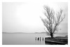 Tree (Nat.Images .) Tags: tree longexposure leefilters silence monochrome bw natimages milvus2100m zeiss carlzeiss nd110 nd106 neutraldensity