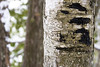 Welcome Stella (Brad_McKay) Tags: ifttt 500px bark branch leaf twig lichen tree trunk wood oak deciduous moss pine winter cold canada ontario algonquin canon carve vandalism park hiking nature natural light