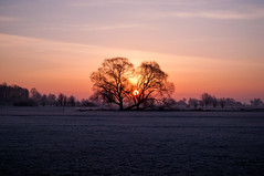 Guten Morgen, Sonne! (Maxi Winter) Tags: sun sunrise sonne sonnenaufgang leverdusoleil soleil arbre baum tree pré wiese weide pasture meadow winter frost frosty landscape landschaft paysage