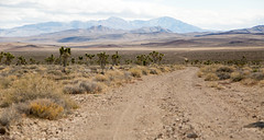 Only the Lonely (Josh Patterson Photo) Tags: landscape blm bureauoflandmanagement mountains desert highdesert road valleyjosh pattersonjosh patterson photographyjoshua trees inyocounty inyo california westcoast dirtroad explore exploration backcountry