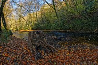 The river - La rivière