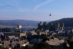 Conwy Castle (monicab1692) Tags: trip enjoynature bestplace fortress fuji fujifilm fujixt20 history top best shoot street photography ancient architecture hills sand port boats helmet solider seagull estuary wales uk love nature travell seaside conwy castle breathtaking escape view from united kingdom treasures blue sky buildings tunnel rooftops forest flying birds stone telephone cabin houses
