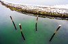 Four poles behind the barrier (harald.bohn) Tags: stolper molo kanalen sjø water poles posts four fjord fjorden trondheim