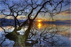 Sempachersee sunset (Hanspeter Ryser) Tags: see wasser sunset sempach sonnenuntergang baum abend gelb rot blau natur la schweiz switzerland centralschweitz landart artndschft