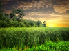 Dakota field 19 (mrbillt6) Tags: landscape rural prairie grass trees sky field green outdoors country countryside northdakota