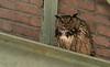 Uhu männchen.... (normen.nikon) Tags: eule uhu d500 nikon 200500 berlebach manfrotto wildlife bird vogel nrw
