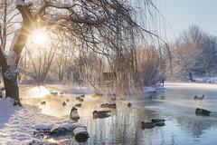 Half frozen lake (grahamvphoto) Tags: kent england snow cold winter ice sun sunrise landscape lake frozen animal wildlife water tree mist