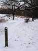 20180318-144559 (aderixon) Tags: naturelandscapehill natureplanttree natureweathersnow transportpath pontypridd midglamorgan walesuk nature snow weather