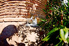 It doesn't look so ruinous to me... (kirstiecat) Tags: torreargentina romancatsanctuary cat feline rome italy italia italian gato gatto gatti chat chatte shadows nature trees leaves sunlight sun ruins romanruins caturday