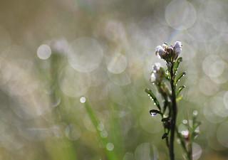 Des bulles de bonheur pour vous tous