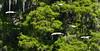 White Ibis (M. Coppola) Tags: hillsborough florida lettucelakecountypark