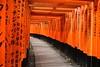 Japan- Fujimi Inari shrine (Kyoto) (venturidonatella) Tags: kyoto japan giappone fujimi fujimiinari fujimiinarishrine shrine tempio temple arancione arancio orange colori colors color colonne tosi nikon nikond500 d500 emozioni emotion