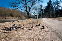 wiosna, cieplejszy wieje wiatr.jpg (MichalKondrat) Tags: 2018 jasnebłonia spacer drzewa niedziela plener park sigma170500mmf28 wiosna marzec nikond300s szczecin województwozachodniopomorskie poland pl