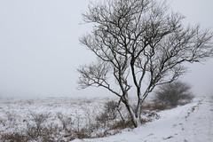 Les Monts d'Arrée sous la neige et la brume (Nadine Le Goff) Tags: monts darrée neige snow mist brume arbre hiver tree winter
