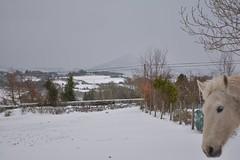 DSC_8046 (seustace2003) Tags: baile átha cliath ireland irlanda ierland irlande dublino dublin éire glencullen gleann cuilinn st patricks day zima winter sneachta sneg snijeg neve neige inverno hiver geimhreadh
