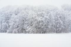 White forest (framedbythomas) Tags: landscape snow forest white winter denmark nature lake frozen trees treeline simple scandinavia