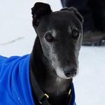 snow hound 02 thumbnail