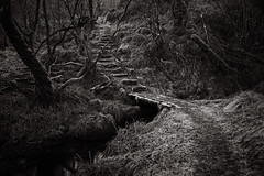 Forest path (ShinyPhotoScotland) Tags: abstractqualities affection argyll art atmospheric awe balance beautiful calm camera composite composition contrasts crazyart darktable dcraw digikam elegance emotion enfuse equipment existentialist files flora fusedalignimgp81410largetiff0008forest glennant harmony hdr hipster image imposing intimatelandscape landscape leadinglines lens light lines manipulated mankindnature mixedlight moment monochrome moody nature nearfar path pathdttiffjpg pathdttiffjpgxmp peace pentax28105mm pentaxk1 people photography places rawconversion read scotland sepia shapeandform shapely simplecomplex solitary spooky striking sumptuous taynuilt toned tranquil transport trees walking warm whiteanttrail zen