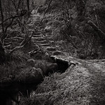 Forest path thumbnail