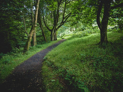 Northern Ireland - Glenns of Antrim-22 (themitty) Tags: northernireland ireland landscape nature scenic europe irish trees path green